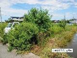 愛知県北名古屋市徳重吉原31番 土地 物件写真
