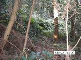 愛知県知多郡南知多町大字内海字倉木子5番 土地 物件写真