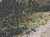佐賀県多久市南多久町大字長尾4298番18 農地 物件写真