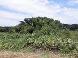 埼玉県さいたま市見沼区大字丸ヶ崎字下谷2113番 土地 物件写真