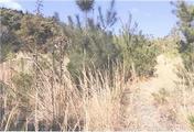 広島県三原市久井町山中野字逆池642番 農地 物件写真