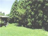 宮崎県小林市細野字大王4982番6 農地 物件写真
