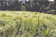 宮崎県宮崎市田野町字永野乙12518番1 農地 物件写真