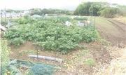 神奈川県横須賀市長井一丁目1273番1 農地 物件写真