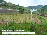 長崎県東彼杵郡川棚町猪乗川内郷1099番1 土地 物件写真
