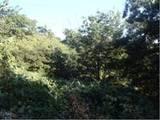 大阪府柏原市大字太平寺821番 土地 物件写真