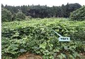 千葉県白井市十余一字捕込附64番4の2 土地 物件写真