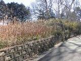 茨城県稲敷市犬塚字八郎次1619番23 土地 物件写真