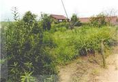 愛知県知多郡阿久比町大字草木字福池29番 農地 物件写真