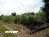 愛知県稲沢市祖父江町三丸渕江北西119番 土地 物件写真
