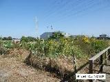 愛知県海部郡蟹江町須成西6丁目31番 土地 物件写真