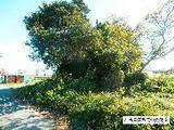 静岡県磐田市中平松字新田708番2 土地 物件写真