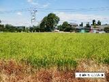 愛知県稲沢市矢合町宮西1112番 土地 物件写真