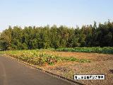 静岡県浜松市西区舘山寺町字三栗山884番1 土地 物件写真