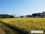 愛知県海部郡蟹江町大字須成字西市之坪1612番 土地 物件写真