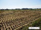 愛知県海部郡蟹江町大字須成字敵目1557番 土地 物件写真