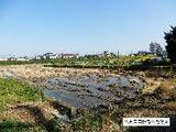愛知県海部郡蟹江町大字須成字東河原1465番 土地 物件写真