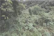 和歌山県田辺市中芳養字日用2629番5 農地 物件写真