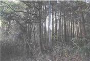 奈良県奈良市中畑町1133番2 土地 物件写真