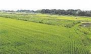 千葉県木更津市犬成字下立柄154番 農地 物件写真