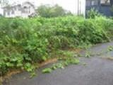 千葉県八街市四木字東四木389番1 土地 物件写真