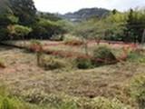 千葉県鴨川市西江見字角木654番3 土地 物件写真