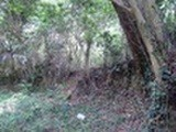 三重県鳥羽市国崎町字雉子ガ谷546番 土地 物件写真