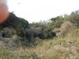 千葉県匝瑳市亀崎字木鎌45番山林297㎡ 土地 物件写真