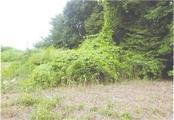 茨城県水戸市東野町字東山63番15 土地 物件写真