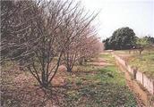 茨城県小美玉市佐才字菜洗655番1 農地 物件写真