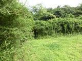 茨城県石岡市東大橋字池袋1234番 土地 物件写真