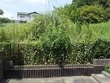 奈良県奈良市秋篠町1019番 土地 物件写真