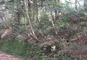 栃木県塩谷郡塩谷町大字熊ノ木字向山1174番387 土地 物件写真