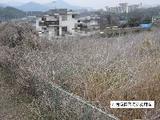 神奈川県厚木市七沢字実蒔原355番地 土地 物件写真