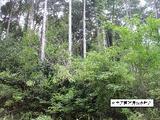 静岡県富士宮市安居山950 土地 物件写真