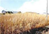 静岡県袋井市村松字東浦2509番1 農地 物件写真