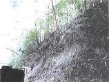 佐賀県佐賀市富士町大字鎌原字立石1150番17 土地 物件写真