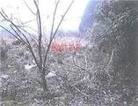 佐賀県佐賀市富士町大字鎌原字山頭1346番 農地 物件写真