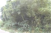 沖縄県名護市字為又為又原1194番7 土地 物件写真