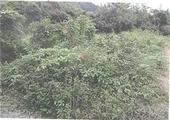 愛媛県伊予市上吾川字十合甲1498番2 農地 物件写真