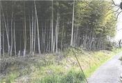 奈良県大和郡山市城町1432番 農地 物件写真