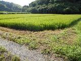 茨城県鉾田市汲上字橋本4960番 土地 物件写真