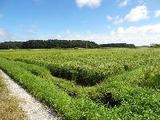 千葉県香取郡多古町御所台字表370番 土地 物件写真