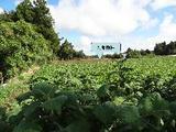 千葉県香取郡多古町御所台字土カリ99番 土地 物件写真