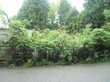 神奈川県相模原市緑区青根1317番7 土地 物件写真
