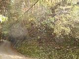 和歌山県伊都郡九度山町大字東郷字地獄谷263番 土地 物件写真