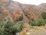 和歌山県伊都郡高野町大字相ノ浦字内小谷505番11 土地 物件写真