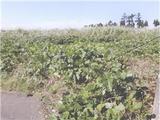 富山県富山市上栄331番 土地 物件写真