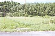 宮崎県宮崎市清武町今泉字祝田甲263番 農地 物件写真