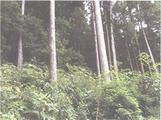 茨城県水戸市田野町字天神東286番 土地 物件写真